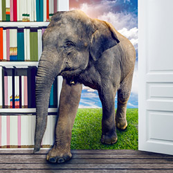Elephant in the room?
